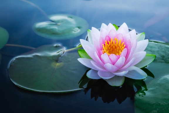 Meditation via Zoom